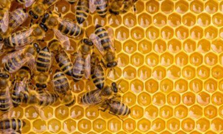 SESSION DE FORMATION EN APICULTURE : Les causes du prix élevé du miel à Mostaganem