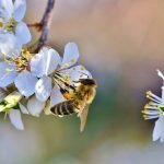 ASEL BLADI : formations apiculture